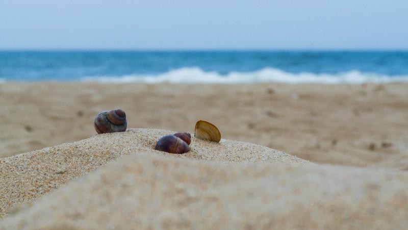 media/image/beach-2795216_1920.jpg